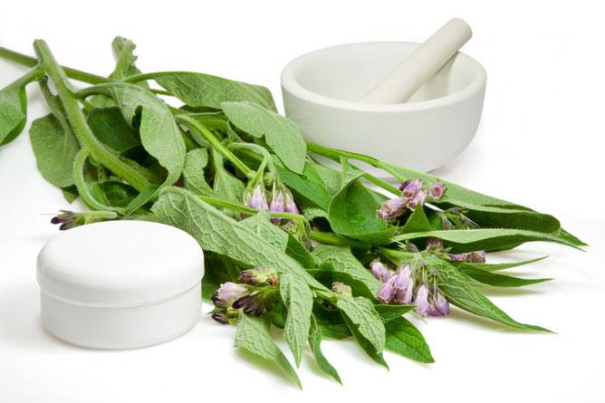 Plantes médicinales hémorroïdes